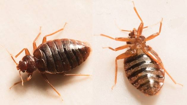 Dc Ranks 13th On Pest Control Firm S List Of Top Bedbug Infested Cities Wtop