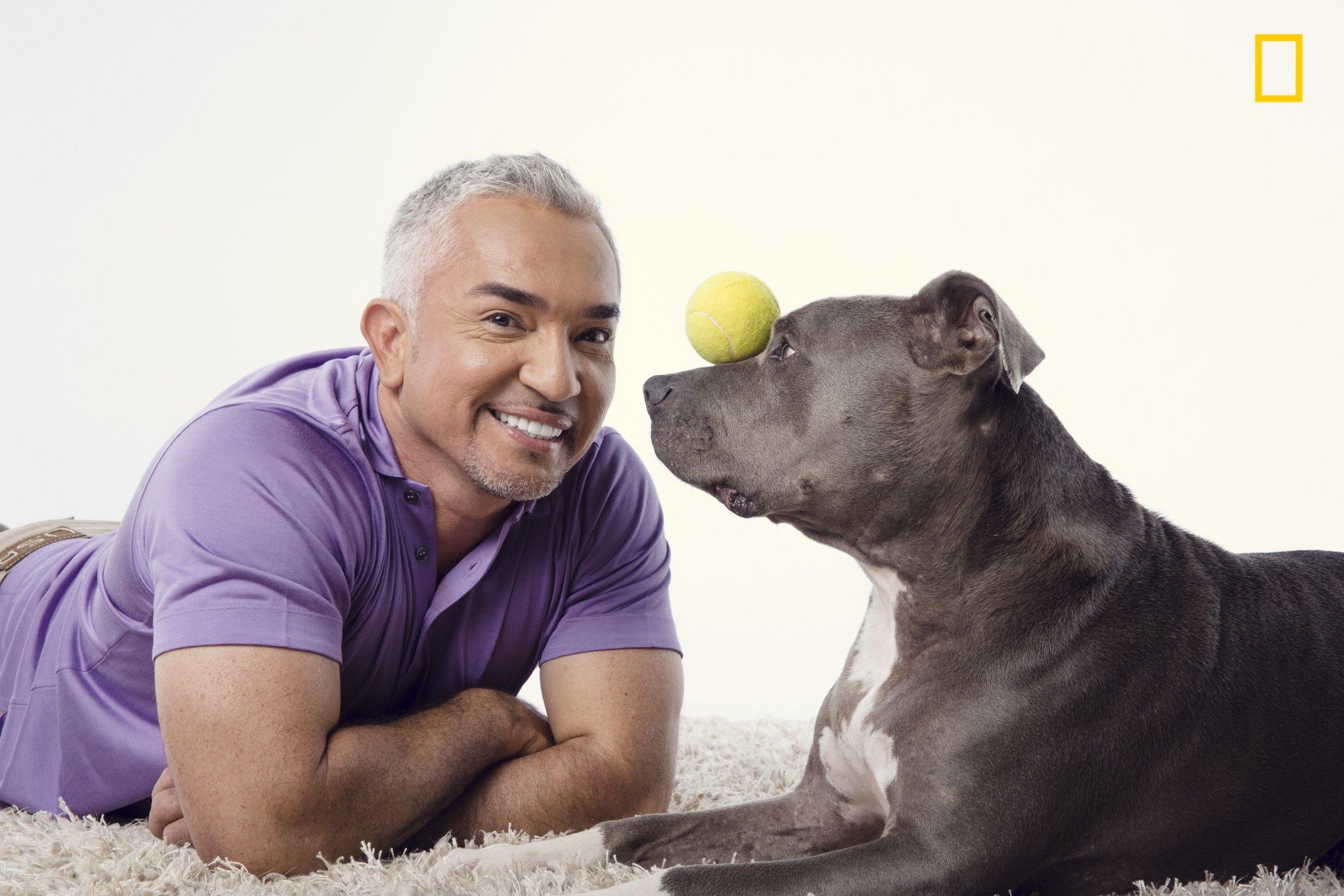 Nat Geo Wild Show On Dog Behavior