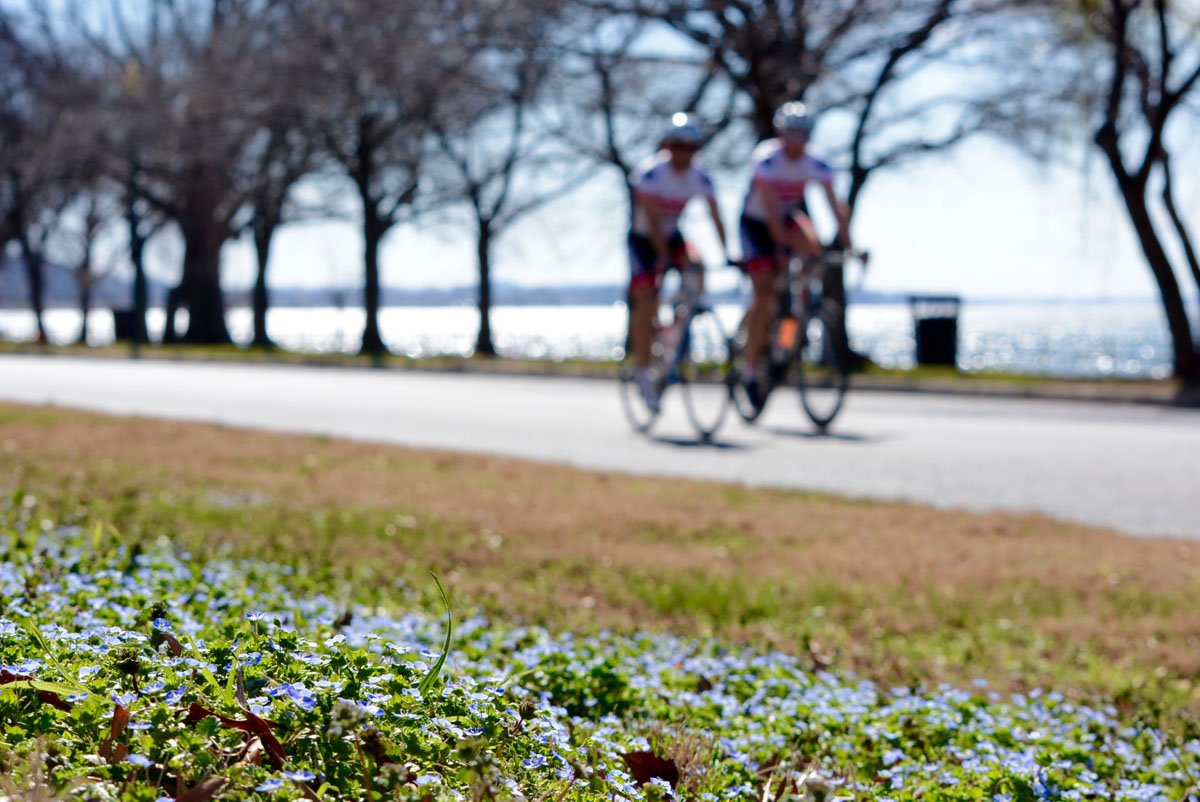 Cyclists enjoying a ride on Hains Point in Southwest D.C. in February 2017. (WTOP/Dave Dildine)