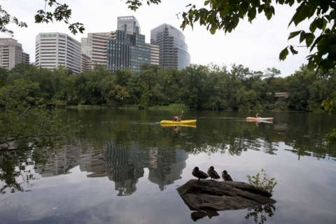 Roosevelt Island closing for weeks for removal of diseased trees