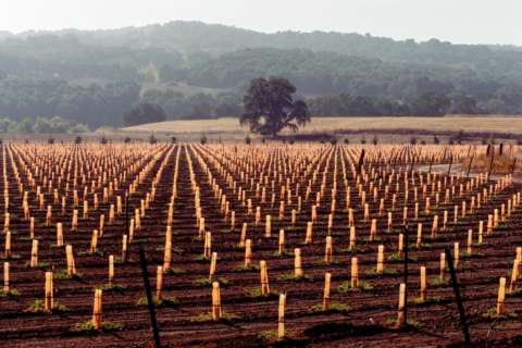 Wine of the Week: Central Coast California has SLO wines