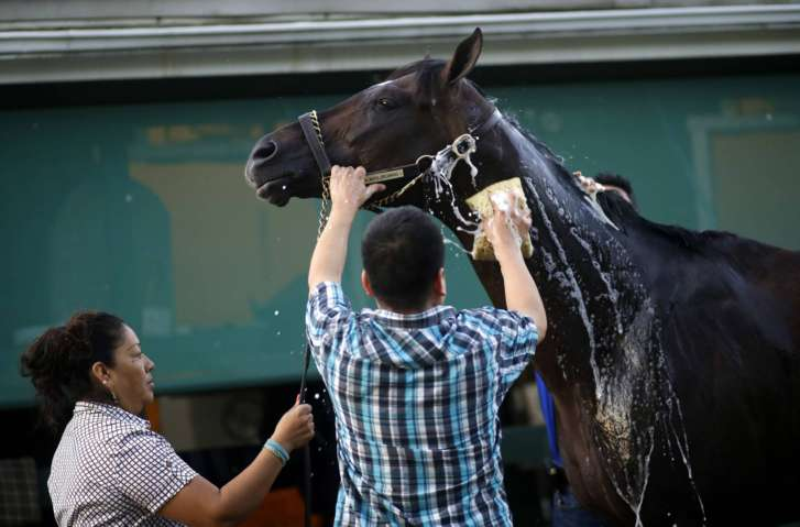 Always Dreaming Heavily Favored in Early Preakness Wagering