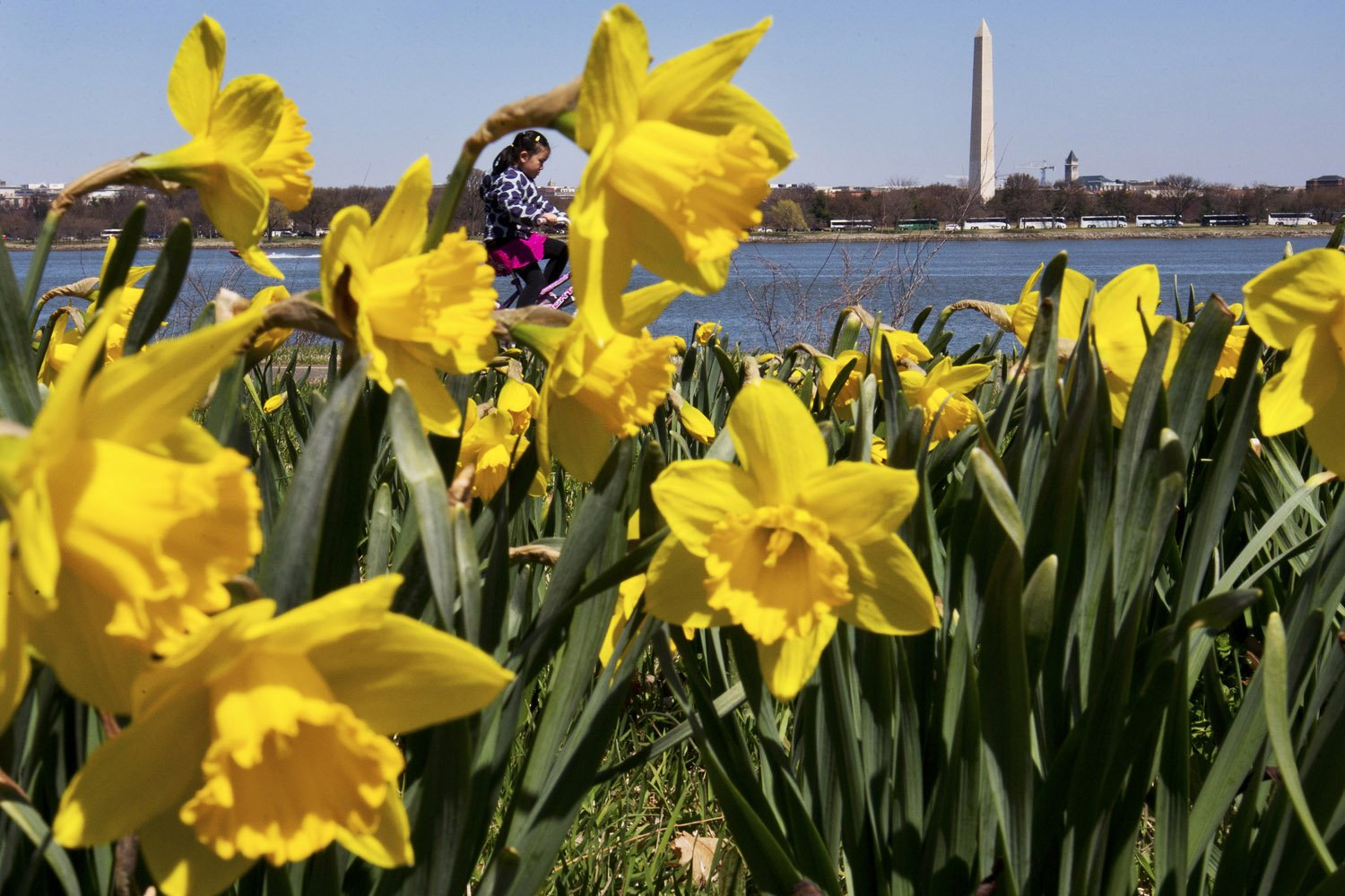 Garden expert Mike McGrath answers questions about moving spring bulbs, mulching around an oak tree and gifts to get dad for Father's Day. (AP Photo/Jacquelyn Martin)