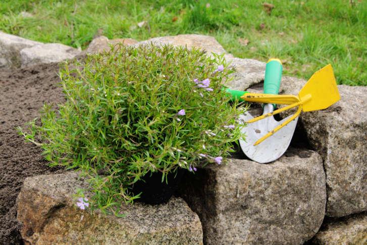 Mike Mcgrath Raised Bed Garden