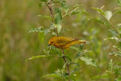Volunteers protect migrating birds from hazards in DC