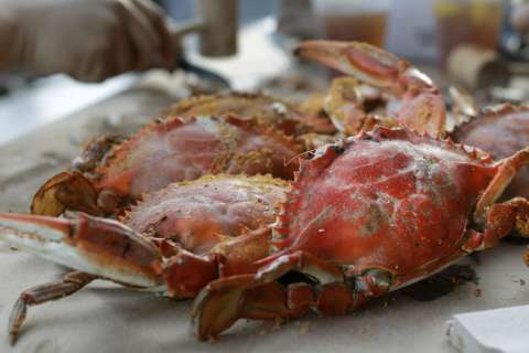 Steamin' summer: Where to find local crabs in the DC area