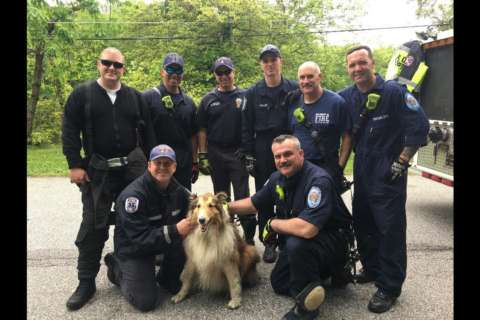 Photos: Maryland firefighters save dog that fell in a hole