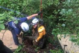 Firefighters rescued an 85-pound border collie that fell in a sinkhole in Woodland Beach. (Courtesy Anne Arundel County Fire Department)