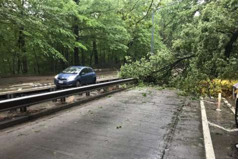 High water, storm threat linger after heavy rain uproots traffic, downs trees