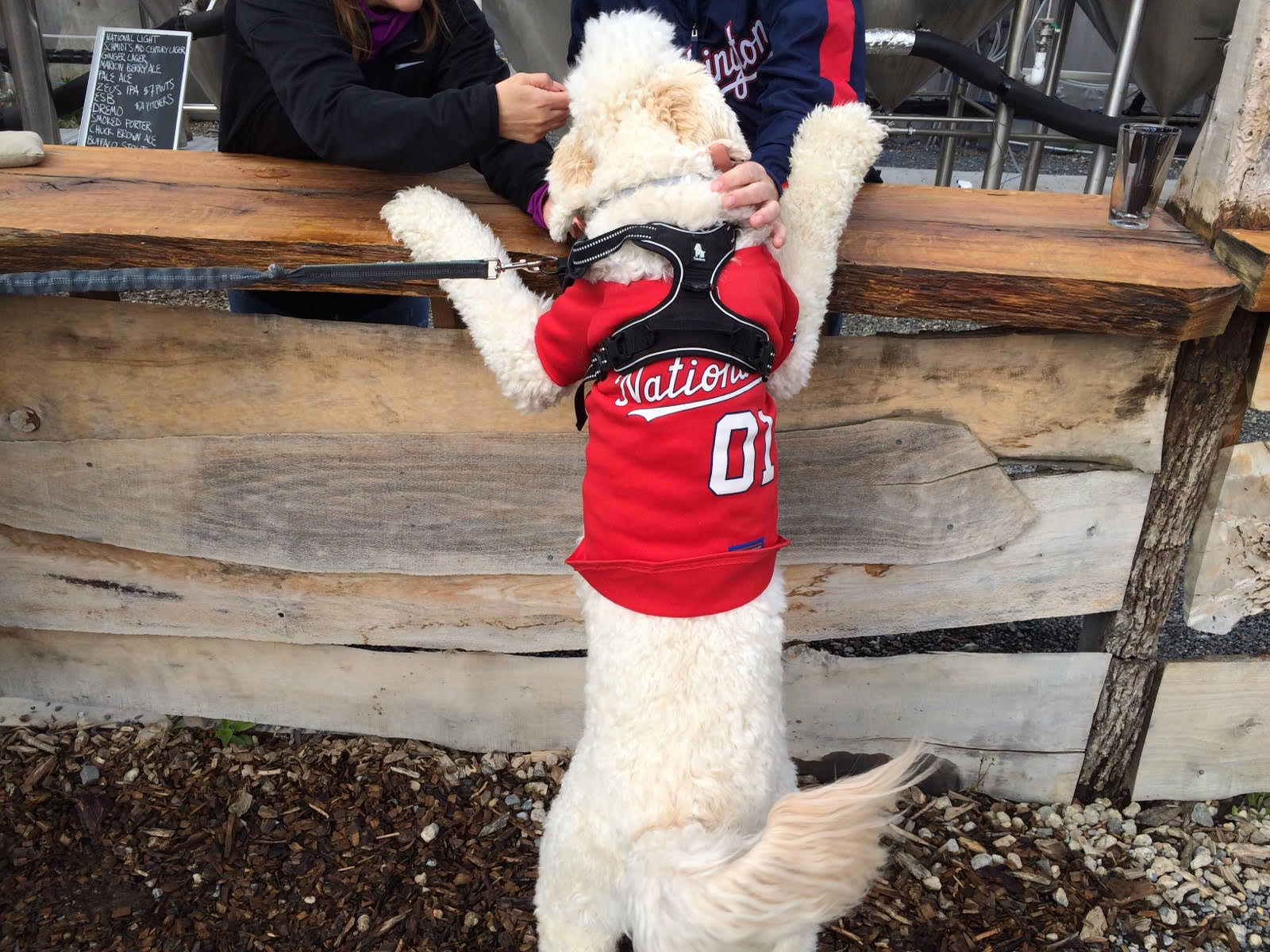 """""""We've always been dog friendly, we figured it would be nice to have an off-leash dog area. It's about half an acre, we feel it's the biggest dog park in the city,"""" said Andrew Stewart, co-owner of Bardo Brewery.   (Andrew Stewart)"""