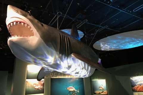 New shark exhibit aims to make over the predator's image