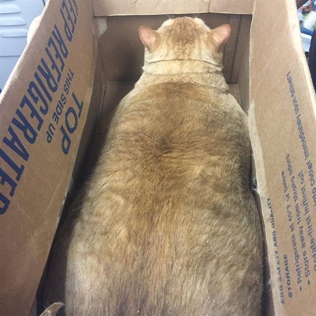 Beloved DC fat cat adopted: Symba the tabby has a new ...