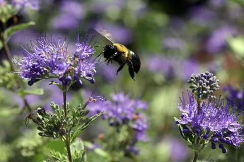 Build a pollinator-friendly garden