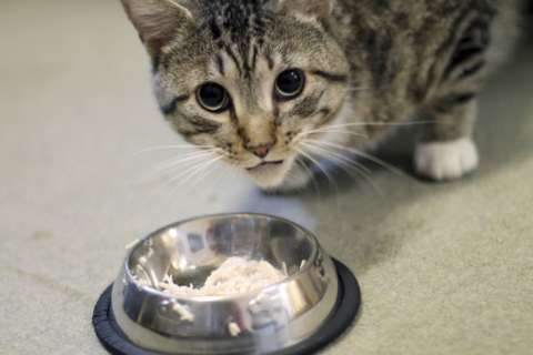 8 costs to consider when adopting a cat