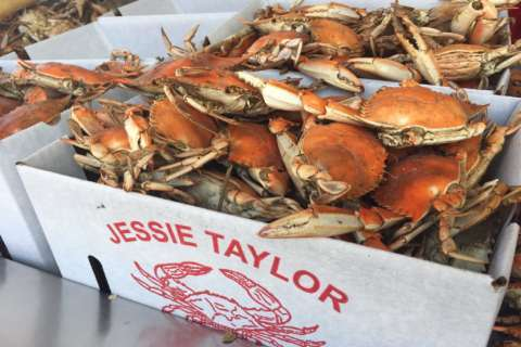 Planning a July 4 crab feast? Here's how much you'll shell out