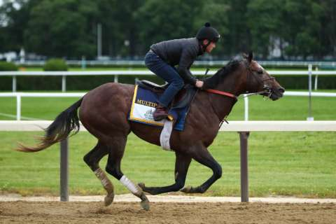 2017 Belmont Stakes field, odds and predictions