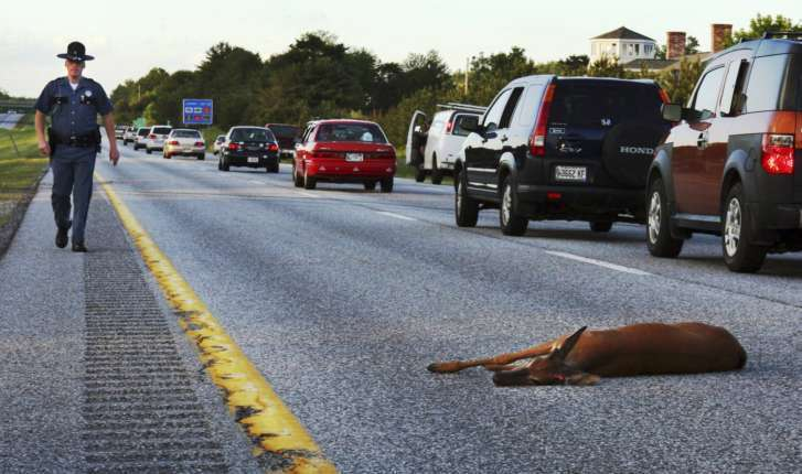 Oregon Decides Roadkill Can Be Harvested to Eat