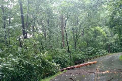 Storms push through region, topple trees
