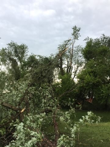 Broken trees litter the ground after a storm ripped through Queen Anne's County, Maryland, on Monday. (Courtesy Angie Chambers Russe)