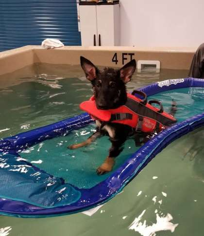 Lisa Castaneda Opened Aquatic Paws Less Than A Year Ago Some Dogs Come To Swim For Fun Others Therapy Courtesy