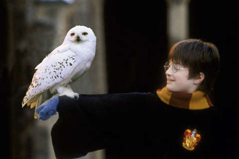 Wolf Trap screens 'Harry Potter' with live NSO accompaniment this weekend