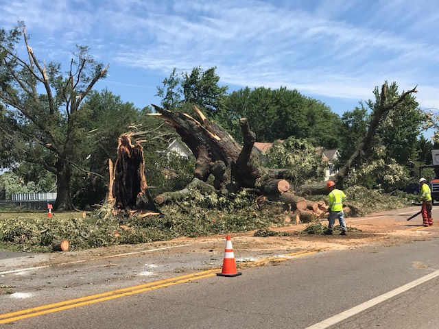 Works remove portions of a downed tree in Stevensville, Maryland on Monday, July 24, 2017. (WTOP/Steve Dresner)