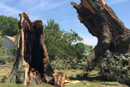 The remains of a downed tree tower over its stump in Stevensville, Maryland on Monday, July 24, 2017. (WTOP/Steve Dresner)