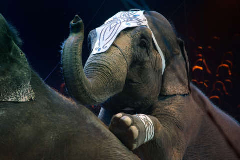 Montgomery Co. considers ban on circus animals