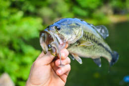 Holding nice catch