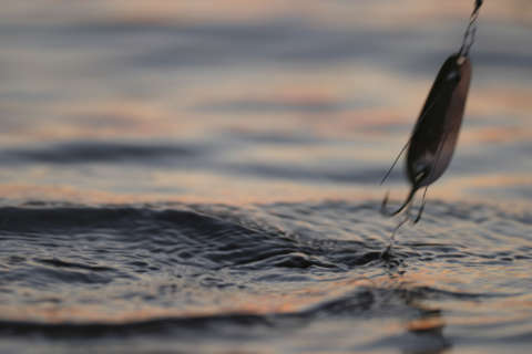 That's one big fish: Maryland man catches record-breaking mahi mahi