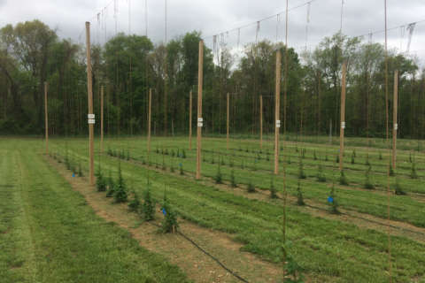 Flying Dog Brewery partners with U.Md. to find the best hops
