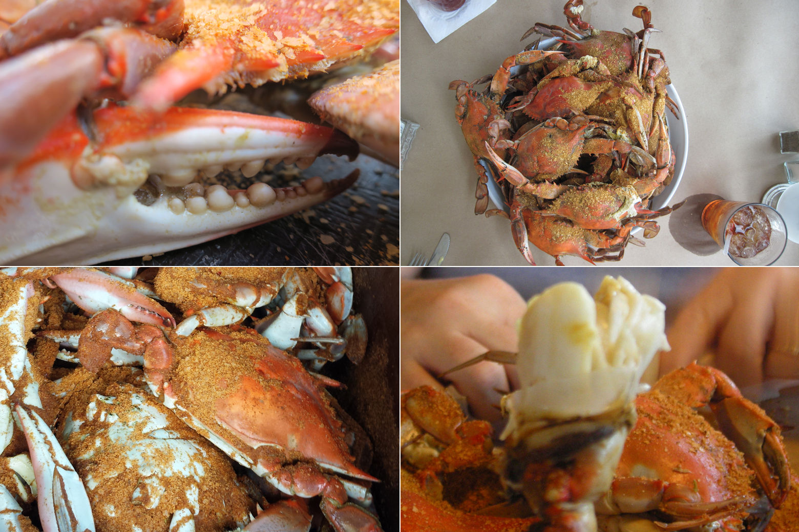 Steamin' summer: Where to find local crabs in the DC area   WTOP