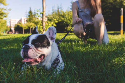 5 tips for keeping your pet safe this summer
