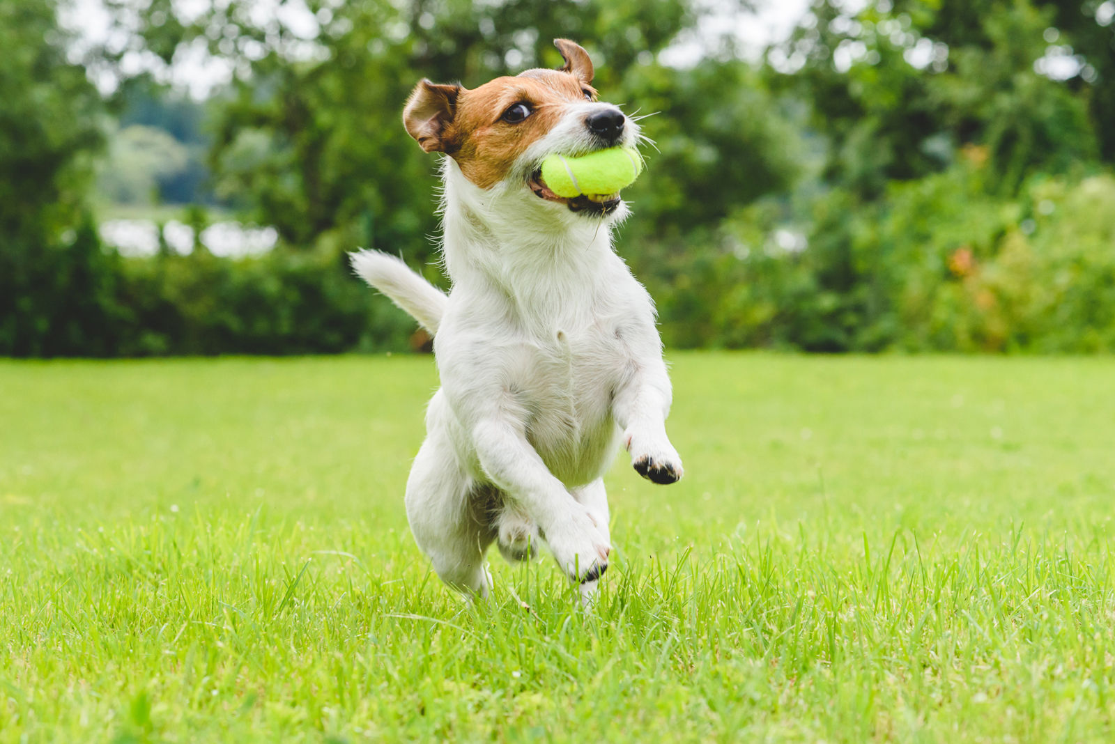 What to do with dogs that think your lawn is a bathroom | WTOP