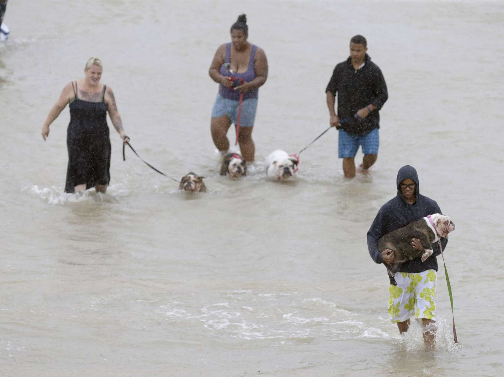 People walk with dogs along a street at the east Sam Houston Tollway from rescue boats as evacuations continue from flooding in Houston, Texas, Monday, Aug. 28, 2017, following Tropical Storm Harvey. Floodwaters reached the rooflines of single-story homes Monday and people could be heard pleading for help from inside as Harvey poured rain on the Houston area for a fourth consecutive day after a chaotic weekend of rising water and rescues. (Melissa Phillip/Houston Chronicle via AP)