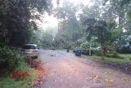 A downed tree pulls on wires near Lake Barcroft Friday morning. (WTOP/Dennis Foley)