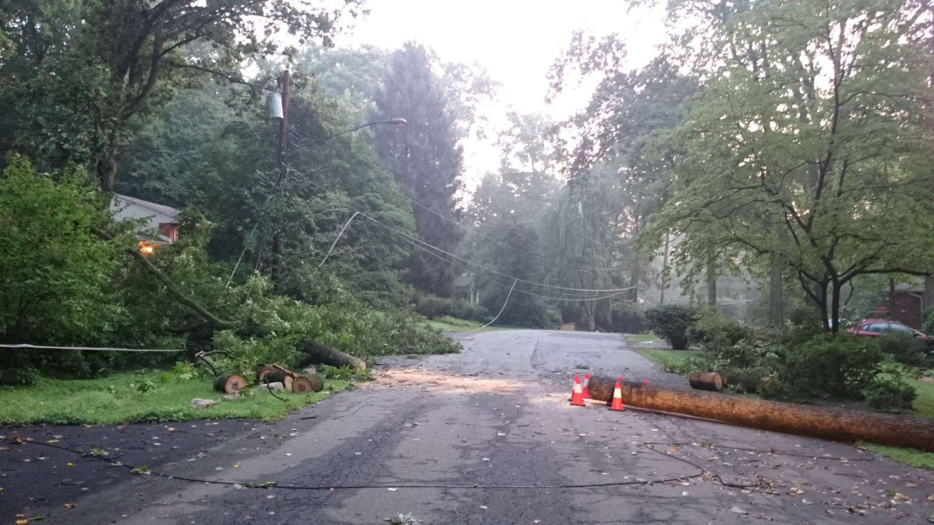 This downed tree in Virginia got some attention. (WTOP/Dennis Foley)