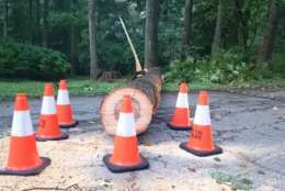 Cones are placed around this down tree in Virginia. (WTOP/Dennis Foley)