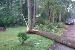 Storms snapped a tree near its base in Virginia. (WTOP/Dennis Foley)