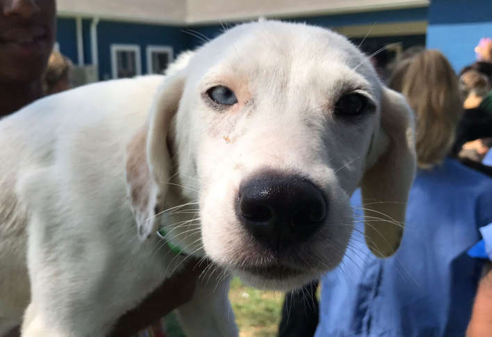It's not just people being evacuated from parts of Texas and Louisiana who have been devastated by Harvey, but animals in shelters, too.