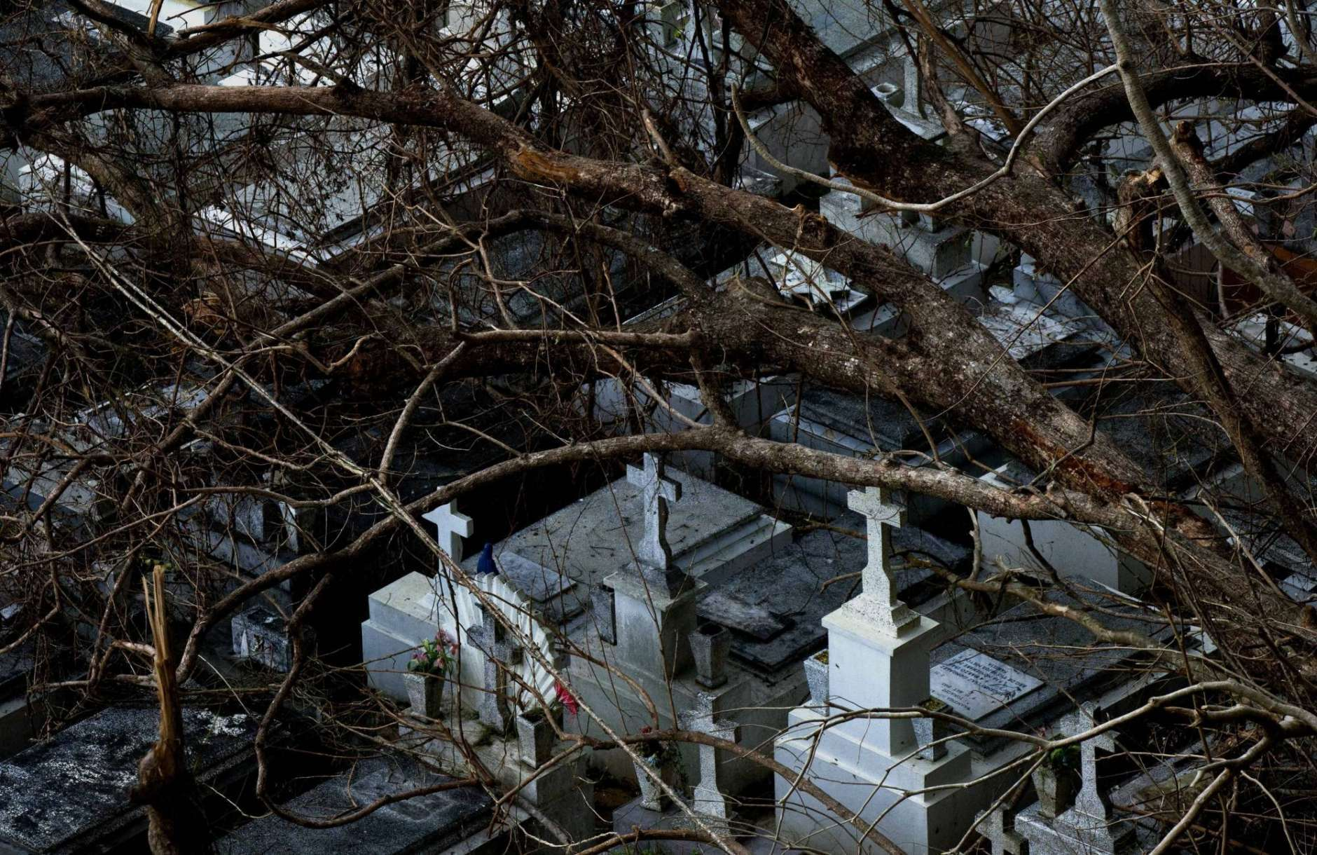Down trees rest on tombs at the cemetery of Lares after the passing of Hurricane Maria, in Puerto Rico, Tuesday, Sept. 26, 2017. Gov. Governor Ricardo Rossello and Resident Commissioner Jennifer Gonzalez, the island's representative in Congress, have said they intend to seek more than a billion in federal assistance and they have praised the response to the disaster by President Donald Trump, who plans to visit Puerto Rico next week, as well as FEMA Administrator Brock Long. (AP Photo/Ramon Espinosa)