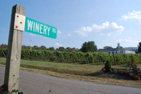 Local winery guide: Where to tour and taste this fall