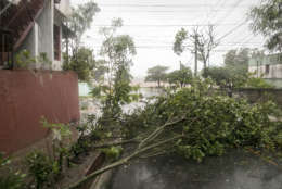 Trees fall to the ground as Hurricane Irma makes its entry into Samana, Dominican Republic, Thursday, Sept. 7, 2017. (AP Photo/Tatiana Fernandez)