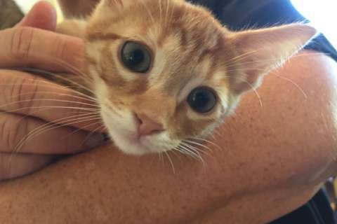 Cats, kittens from Fla. shelters arrive in Md.