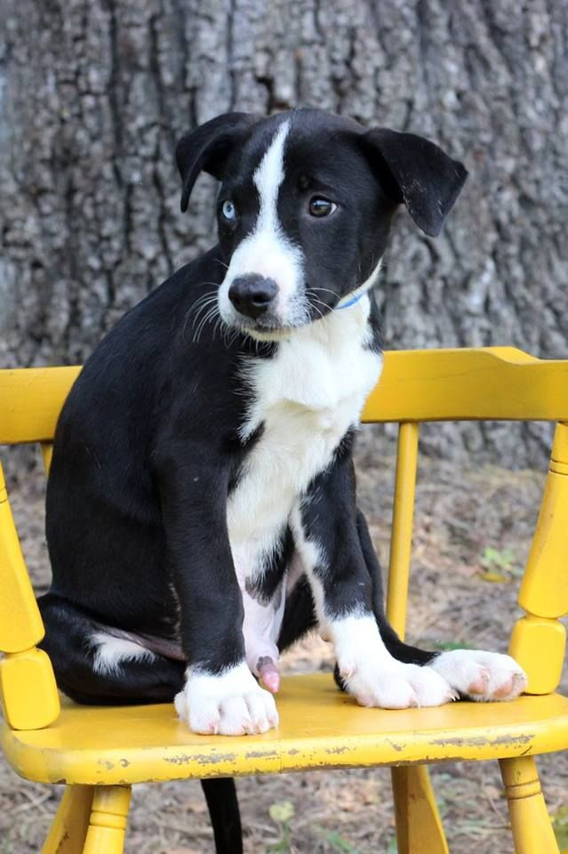 Conroe, one of the puppies from Texas and Louisiana scheduled to be available for adoption in Maryland this weekend. (Courtesy Last Chance Animal Rescue)