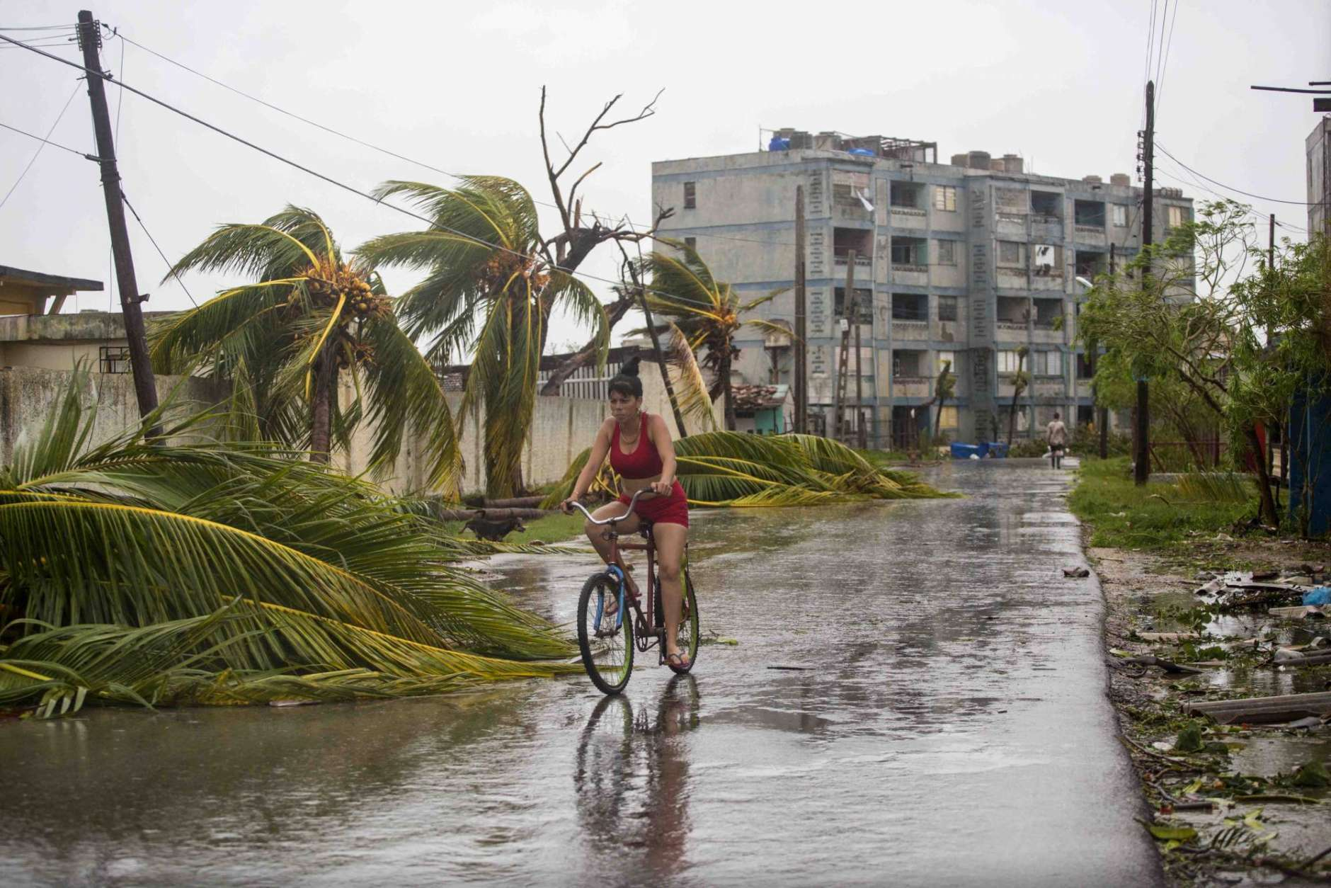 A woman rides a bike past palm trees felled by Hurricane Irma, in Caibarien, Cuba, Saturday, Sept. 9, 2017. There were no reports of deaths or injuries after heavy rain and winds from Irma lashed northeastern Cuba. Seawater surged three blocks inland in Caibarien. (AP Photo/Desmond Boylan)