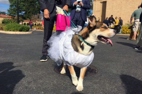 All dogs go to heaven: Pets get blessed at DC monastery