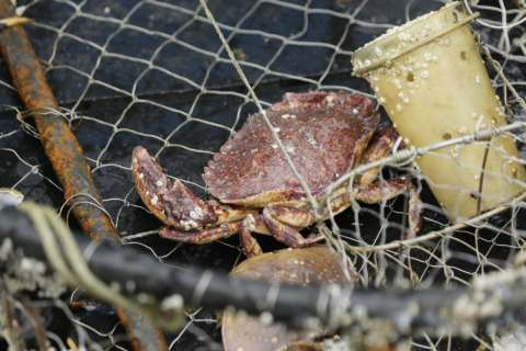 Deep-sea crab fishing quota to stay same in 2019