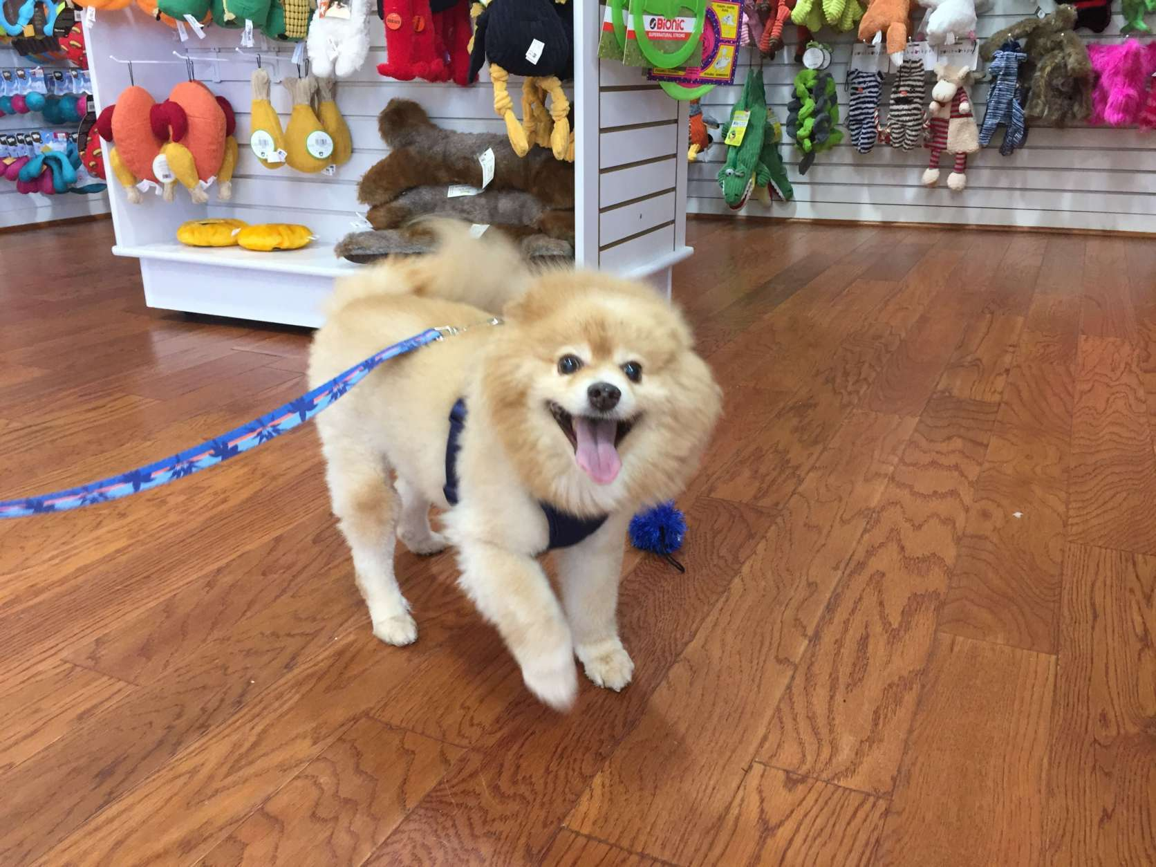 "Food, ""piddle pads"" and an extra leash are the main items in Sarah Miller's ""go kit"" for Teddy, her Pomeranian. (WTOP/Rich Johnson)"