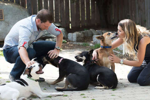 Max, Erica Scherzer sponsor week of pet adoptions as thank-you to DC
